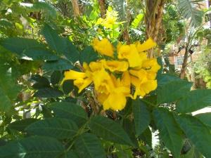 vackra blommor (1)